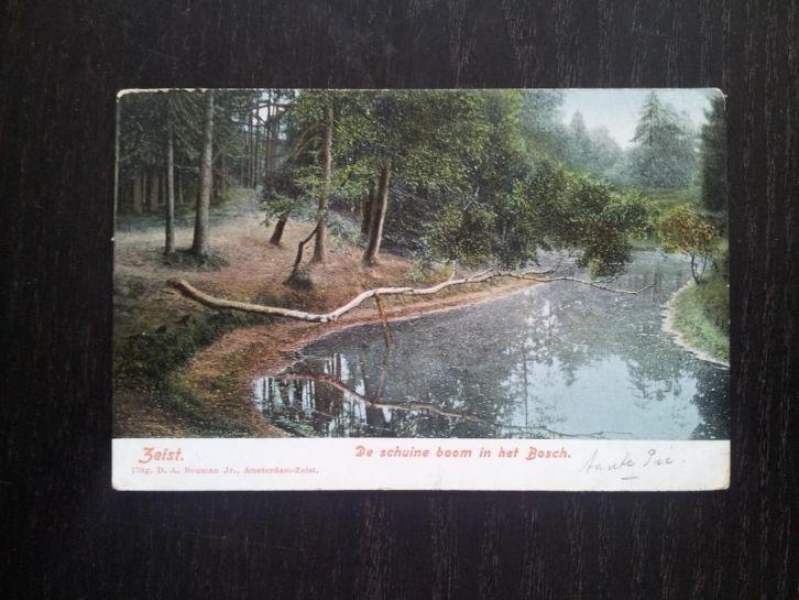 Zeister Bosch 1908