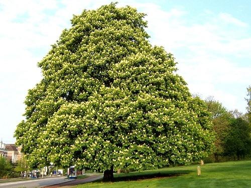 Uitnodiging van Gemeente Zeist: bomenbeheerplan